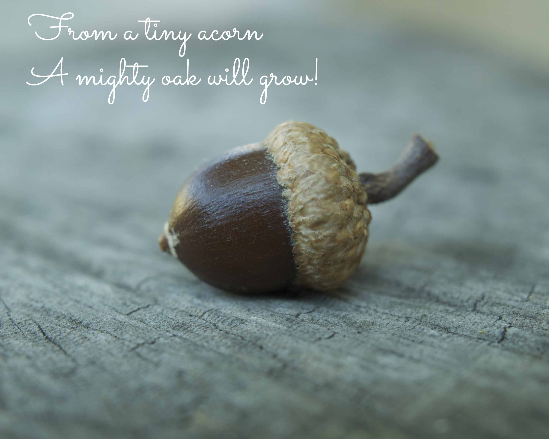 little acorns quotes