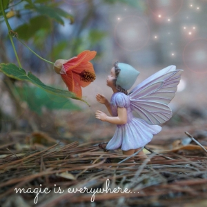 Magic-is-everywhere1-300×300