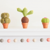 cactus, set of 3 photo