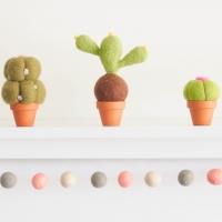 cactus, set of 3 photo