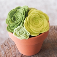 Large felted succulent plant, 5 inches