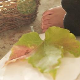 Discovering Waldorf ::: Celebrating Autumn