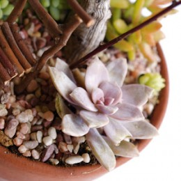 Tutorial : Make a Succulent Fairy Garden : www.theMagicOnions.com
