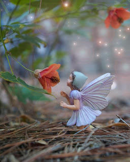 Finding Fairies