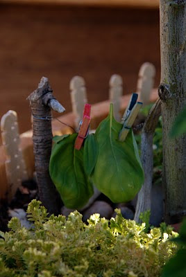 Enchanting Fairy Garden