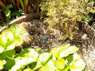Fairy Garden, magical gardening with children