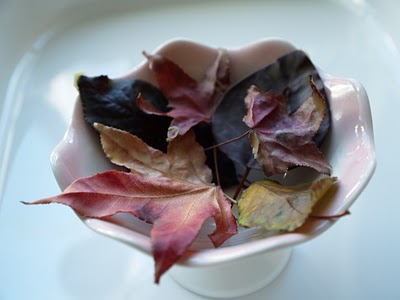 Preserve Autumn Leaves with Beeswax.