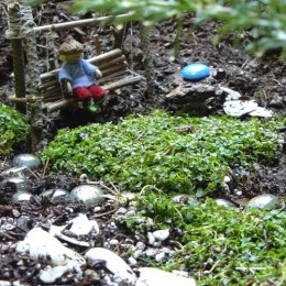 Come and see some Fairy Gardens!