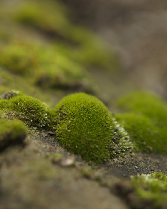 A Mossy Stone
