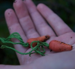 Little Carrots for your Fairy Garden :: Fairy Gardens 2013