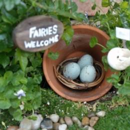 Our New Fairy Garden :: Fairy Gardens :: 2013