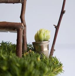 Make a Tiny Pot Plant :: Fairy Gardens :: 2013