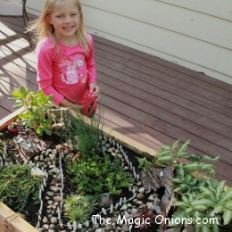 3rd Place Winner : Fairy Garden contest