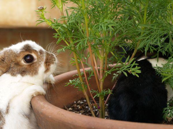 Bunny  : www.theMagicOnions.com