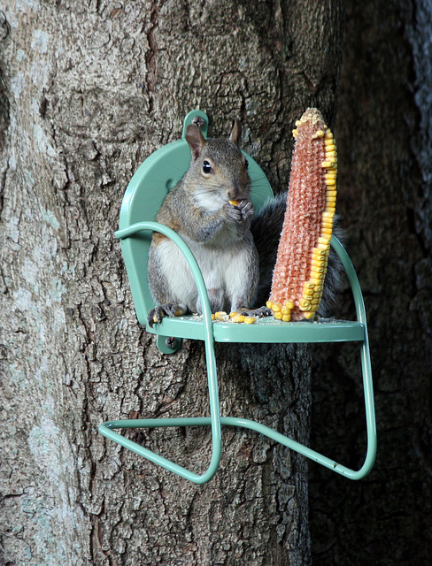 Cute Squirrel Feeder : The Magic Onions : www.theMagicOnions.com