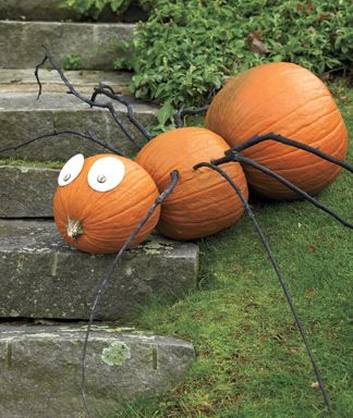 Halloween Pumpkin Spider : www.theMagicOnions.com