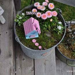 Fairy Garden Feature : FIVE