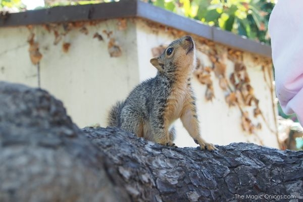 Teaching a baby squirrel how to climb : The Magic Onions Blog