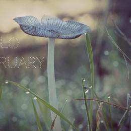 Hello February!