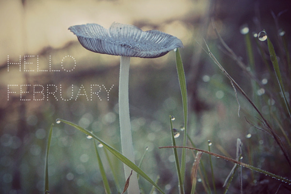 Hello February : www.theMagicOnions.com