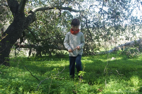 Nature Walk : www.theMagicOnions.com
