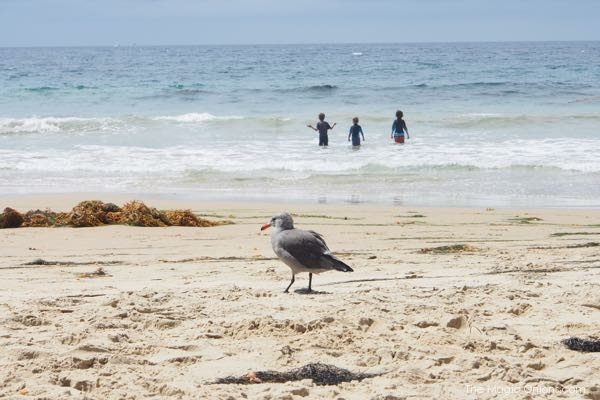 Seagull photo at Crystal Cove Beach