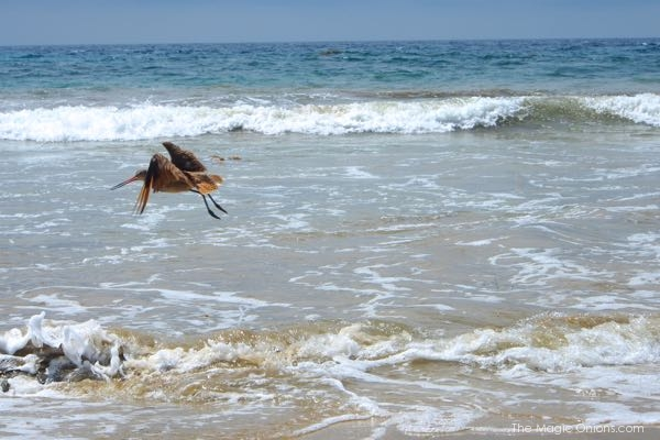 Sea birds at Crystal Cove Beach photo