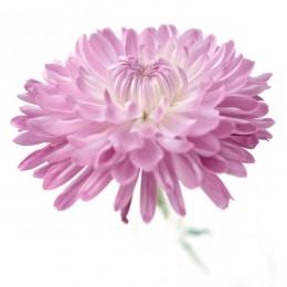 Beautiful Dahlias & Favorite Blogs to Share.