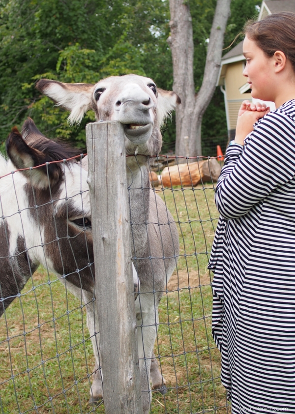 Photo of Kitty and the donkeys : www.theMagicOnions.com