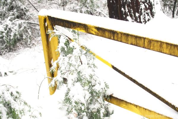 Fun in the Snow : The Magic Onions -- www.theMagicOnions.com - 1