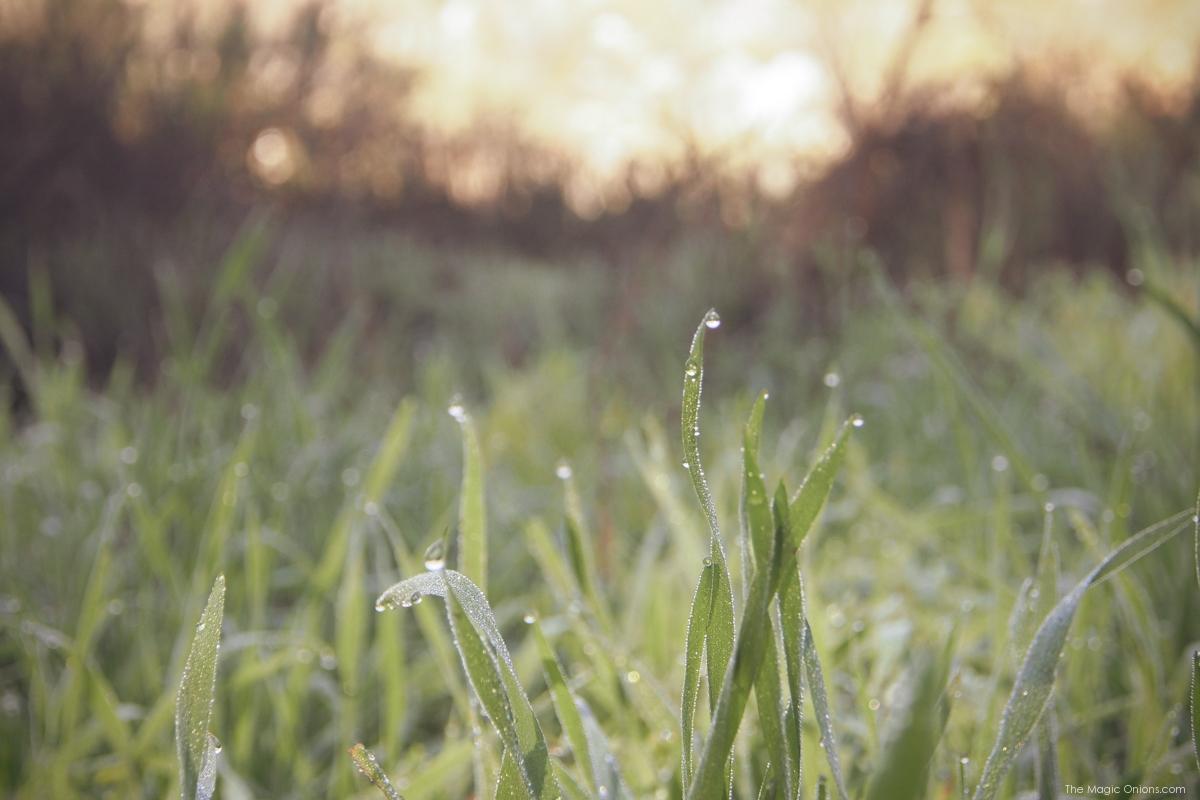 Nature Walk :: The Magic Onions :: www.theMagicOnions.com