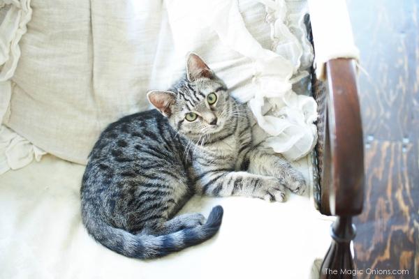 The Kitten Prince