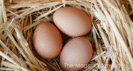 Photo of chicken eggs :: www.theMagicOnions.com