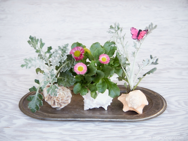 Miniature Spring Garden planted in a Shell :: DIY