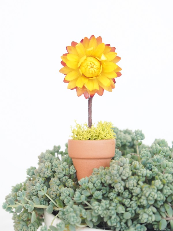 Miniature Sunflower Pot Plant for your Fairy Garden