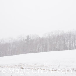 Snow, Glorious Snow