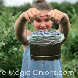 Berry Picking :: Summer Fun in New England