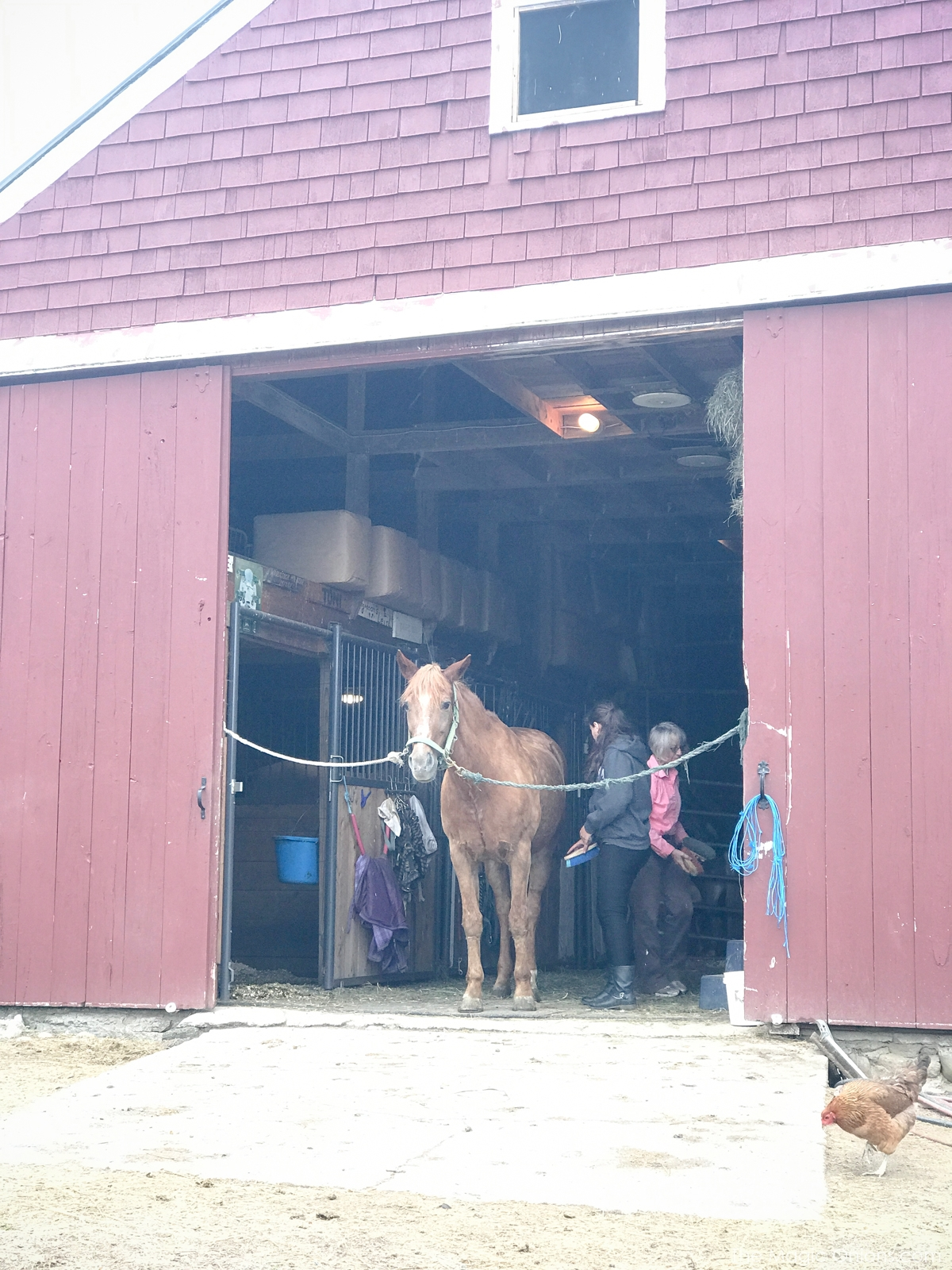 Photo of horse in barn